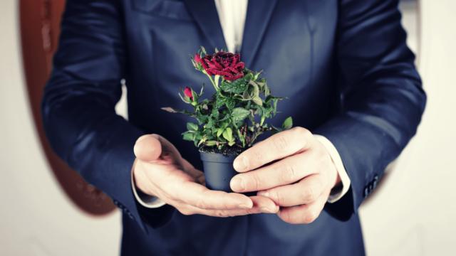 夫婦にとって大切な結婚記念日に贈る花の選び方と注意点について